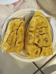 Jackfruit (Artocarpus heterophyllus) (Adam J Skowronski) Tags: jackfruit artocarpusheterophyllus