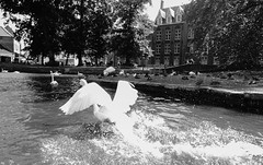 Escaping the Water (UnsignedZero) Tags: animal belgium bird birds bruges item landscapes landscaping object out outdoor outdoors outside outsides sunny water weather