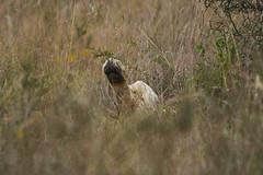 Talk To The Paw (paulinuk99999 - just no time :() Tags: paulinuk99999 wildlife niarobi national park sal70400g kenya