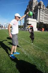 DSC06234 (liverpix) Tags: cleo dog performing anthonywalsh photowalk 500px liverpool pierhead liverbuilding ballerina ballet
