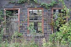 Overgrown windows. Full article here: http://www.placesthatwere.com/2016/08/beautiful-abandonment-nature-reclaims.html #abandoned #abandonedplaces #decay #abandonedbuilding #derelict #Iowa #industrialdecay #urbex #urbanexploration #lehigh #brick #windows (placesthatwere) Tags: abandoned urbanexploration ghosttowns urbex rurex abandonedplaces forgottenplaces urbandecay decay beautifuldecay