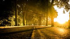 Sonnig (fotos_by_toddi) Tags: fotosbytoddi voerde niederrhein nrw nordrhein westfalen natur nature lights licht light lichter sonnenuntergang sunset sun sony a7 alpha alpha7 sonya7 sonyalpha7 sunnyday germany deutschland drausen