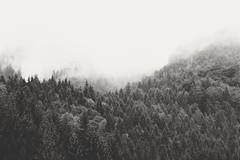 (desomnis) Tags: forest woods trees fog mist misty foggy mistymood rain clouds woodland wood monochrome blackandwhite monochrom bw nature landscape landscapes naturephotography landscapephotography desomnis