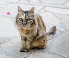 Misha at 14 (Jonathan Palfrey) Tags: photo digital photomatix exposurefusion portrait cat misha
