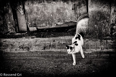 B/W (rossendgricasas) Tags: street cat animal cats animales gatos feline urban exploration gat bw