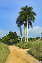 _DSC6686-1 (Photo.rfd) Tags: camino campo paisaje landscape palmas