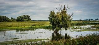 Flood in the Dutch delta