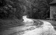 Gathland State Park (je245) Tags: leicam3 leicasummicron50mmf20rigid kodak px125 diafine