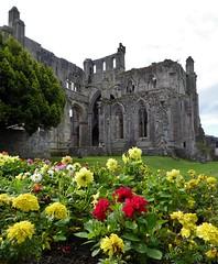 Melrose Abbey and Flowers (chdphd) Tags: melroseabbey melrose abbey