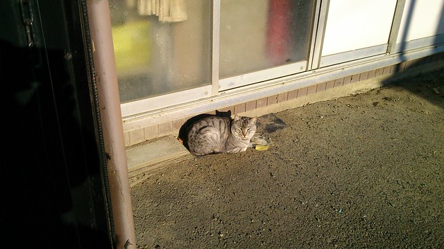 Today's Cat@2012-12-10