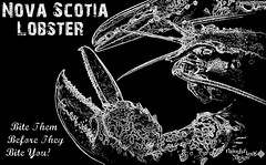 Nova Scotia Lobster (Thought Knots Design) Tags: ocean life travel sea white fish canada color colour travelling art colors nova animal animals photoshop poster logo photography design coast graphicdesign living fishing artwork thought colours tour novascotia graphic live bottom great north creative manipulation sealife visit pop creation future funk lobster seafood alive create nautical portfolio scotia crustacean fishingboat brand catalogue knots atlanticocean tkd livin fishin maritimes traveler antigonish dweller creatively lobsterfishing bottomdweller atlanticlobster novascotialobster clobster thoughtknots thoughtknotsdesign illucion thoughtnauts thoughtnaut thoughtnautical seainsect