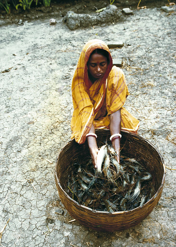 Harvest from the pond. Photo by Ebbe Schioler, 2002.