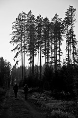 (Michad90) Tags: wood trees people bw black forest walking nikon d90