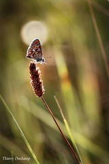 Sous le projecteur (photosenvrac) Tags: macro nature fleur papillon thierryduchamp