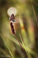 Sous le projecteur (photosenvrac) Tags: macro nature fleur papillon thierryduchamp