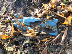 Escape Is Futile (Munki Munki) Tags: blue seaweed abandoned beach sand redcar rubberglove coatham southgare seacoal