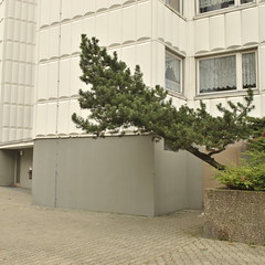 Gropius-Stadt, Berlin (J@ck!) Tags: berlin germany deutschland modernism towerblock hochhaus socialhousing waltergropius gropiusstadt
