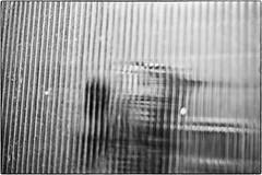Caged Wildcat, December 18, 2012 (Maggie Osterberg) Tags: leica bw cat blackwhite nebraska jackson lincoln maggieo zeisssonnar5015 m9p csonnart1550 silverefexpro2