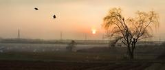 Simple Sunset 3 (greggusan) Tags: winter sunset sun fall birds rural sunrise dawn spring nikon escape dusk flight korea powerlines migration crows telephonewires willowtree iksan migrate jeollabukdo d5100