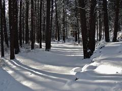 Christmas Eve (Powskichic of Bend) Tags: eve blue snow love pine oregon december peace bend 24 merry christmaseve ponderosa 2012 shevlinpark createbeauty powskichicofbend brendareidirwin