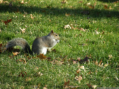 Having a snack in Central Park (Cjasar) Tags: