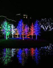 Forest of Fun (TPorter2006) Tags: christmas trees holiday night addison 2012 vitruvian tporter2006 uploaded:by=flickrmobile flickriosapp:filter=toucan enteredpinnacledecember2012 toucanfilter vitruvianlights