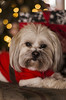 Cullen (Candice Elizabeth) Tags: santa christmas winter dog holiday tree lights nikon holidays december bokeh who doctor tardis d7000