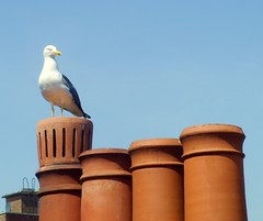 Perched (Tony Worrall) Tags: uk blue roof red wild chimney england sky brick bird english nature ceramic town seagull gull watch visit row pots sit perch worcestershire tops worcester midlands 2012tonyworrall