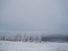 White Winter (Mate Cerise) Tags: white canada cold season photography hiver paysage blanc froid saison