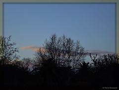 Ciel et arbres (bleumarie) Tags: nature lumire bleu ciel nuage roussillon arbre branche catalogne pyrnesorientales mfcc suddelafrance branchage luminosit thuir bleumarie mariebousquet photomariebousquet