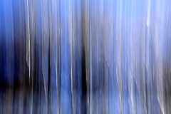 la foresta blu (enki22) Tags: blue nature blu icm abastract intentionalcameramovement enki22