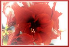 Day 734: Flower_1279 (bjarne.winkler) Tags: birthday flower project day 1000 734