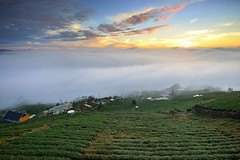 Tea field scenery  (Vincent_Ting) Tags: sunset sky clouds taiwan  formosa  jiayi   seaofclouds alisan    teafield