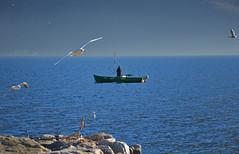 Pescatore #4 (Irene Grassi (sun sand & sea)) Tags: people seagulls lake water lago boat fisherman barca gente reef acqua gabbiani pescatore lagomaggiore cannobio scoglio