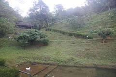 083 (balagopalmohan) Tags: rain country wyanad