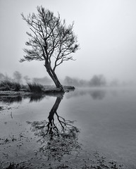 Murky (Buckles Photos) Tags: blackandwhite mist lake tree water reflections lakes lakedistrict cumbria ullswater