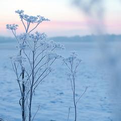 Morgon Sularpsngen III (Gustaf_E) Tags: winter snow lund cold kyla skne vinter sn morgon kallt