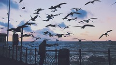 Brighton pier birds