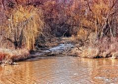 River-Wetlands