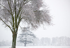 Snowy landscape (Alenmurr) Tags: trees winter snow field snowfall herts fros