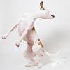 Twisty (Penelope Malby Photography) Tags: dog canine whippet brownandwhitedog dogdancing whippetcross tanandwhitedog penelopemalbyphotography