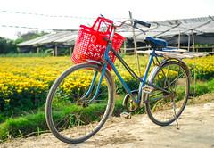 Ở Quê (Quoc Bao Truong) Tags: nikon vietnam viet hue nam nikonian