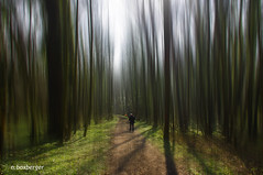 foret (nicole boxberger) Tags: file arbres foret effet