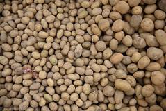 Potato (JohannesLundberg) Tags: burma solanumtuberosum economicbotany biology solanum solanaceae myanmar solanales asterids expedition foodmarket potatis loikaw kayah myanmarburma mm