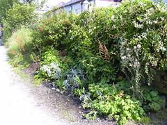 Back Yard (mrrobertwade (wadey)) Tags: wadeyphotos rossendale lancashire mrrobertwade haslingden milltown
