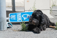 Where's My Owner (UnsignedZero) Tags: animal california dog fortmason item marinadistrict neighborhood object out outdoor outdoors outside outsides sanfrancisco sunny weather