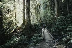 Hoh Rainforest (AmyJanelle) Tags: olympicnationalpark hohrainforest rainforest green explore adventure forest pnw pacificnorthwest washington