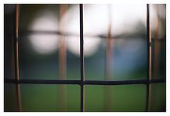 Fences at nightfall (leo.roos) Tags: nightfall sunset zonsondergang fences hekken hek fence fencing projectionlens projector projectorlens astroberlin a7s astrokinocoloriv5014 darosa leoroos