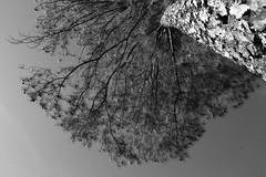 Point of view (Jonas Santoz) Tags: tree sky bw canon polarizer wood
