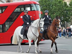 Metropolitan Police Service - Mounted (Waterford_Man) Tags: metropolitanpoliceservice mounted